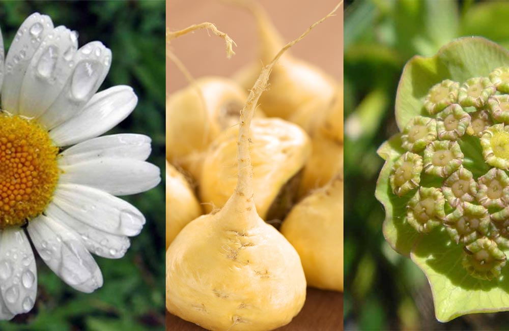 Effective Herbs in Treating Multiple Sclerosis