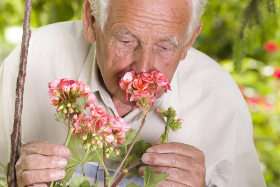 Sense of Smell and Parkinson's